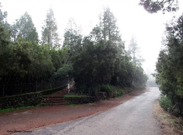 Corona Forestal - Tenerife