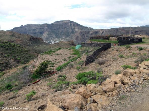 Lomo de La Palma - Gran Canaria