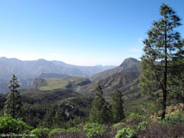 Acusa - Gran Canaria