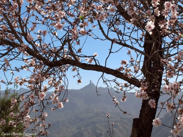 Artenara - Roque Nublo - Gran Canaria - almendros en flor