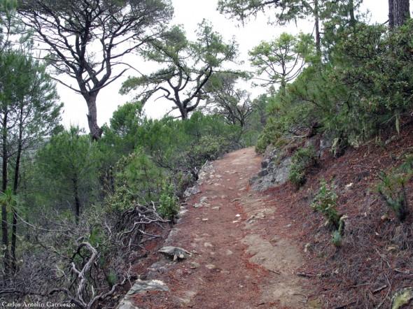 sendero de Altavista - Tamadaba - Gran Canaria