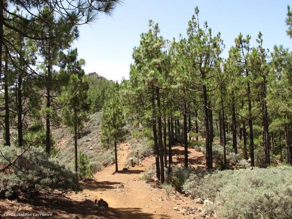 sendero a Degollada Piedras Blancas - Gran Canaria