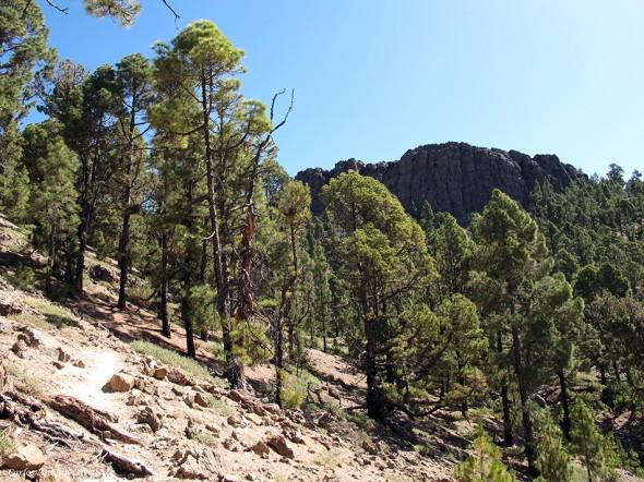Sendero Nº31 en dirección a Las Lajas - Tenerife - sombrero de chasna