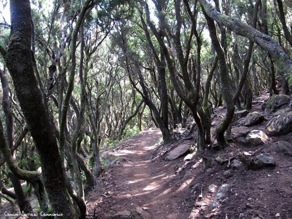 dirección a la Cumbre de Baracán - Teno - Tenerife