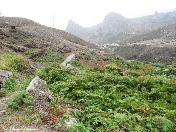 Taganana - La Cumbrecilla - Anaga - Tenerife