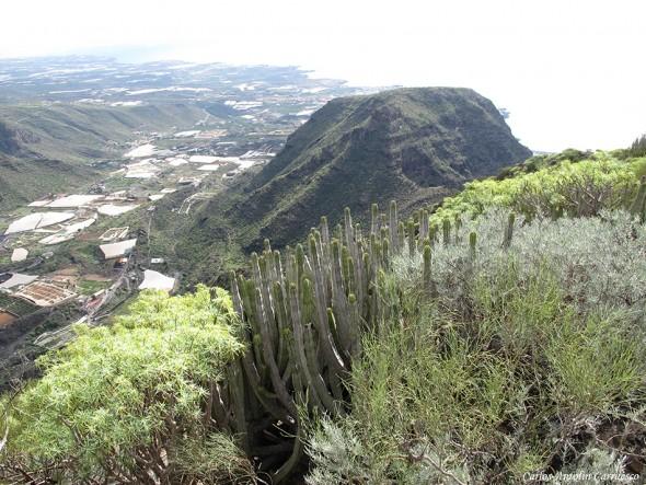 Montaña de Guama - Teno - Tenerife