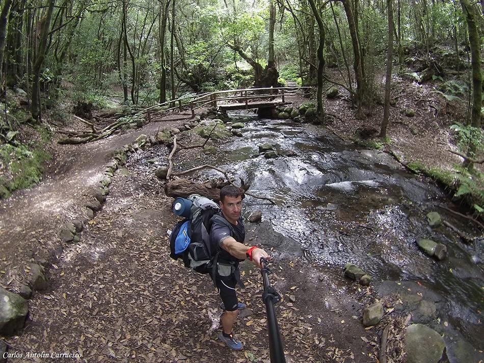 Bosque de El Cedro - La Gomera
