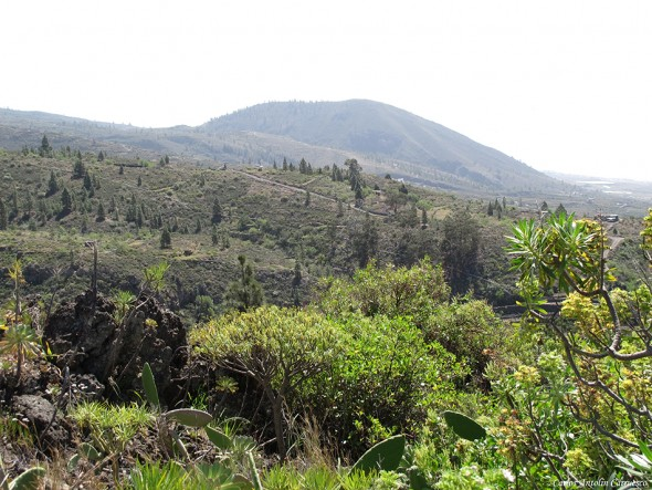 Montaña de Tejina - Guía de Isora - Tenerife