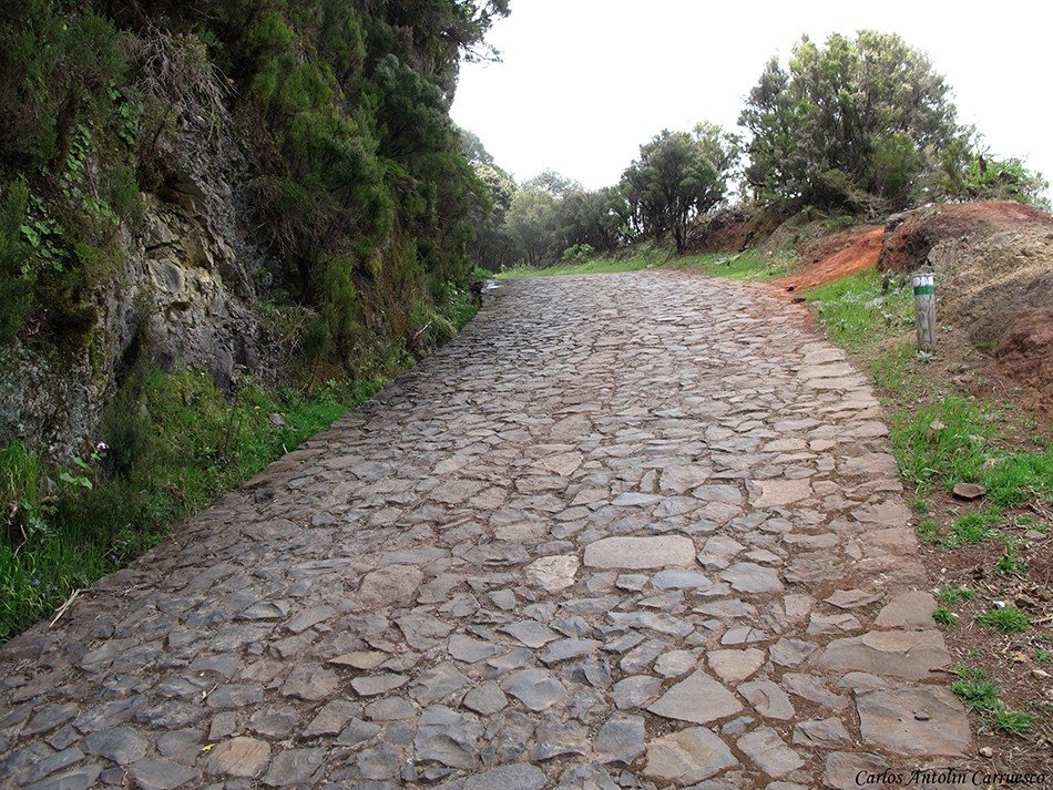 Parque Nacional de Garajonay - La Gomera