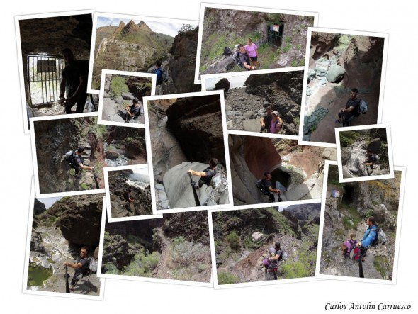 www.wildcanarias.es