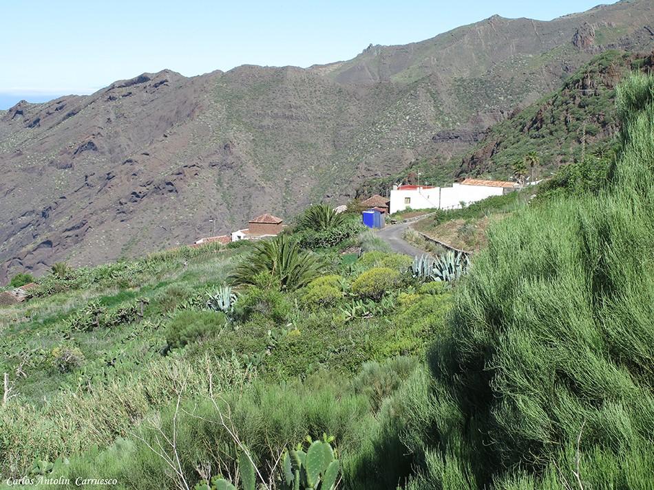Carrizal Alto - Teno - Tenerife