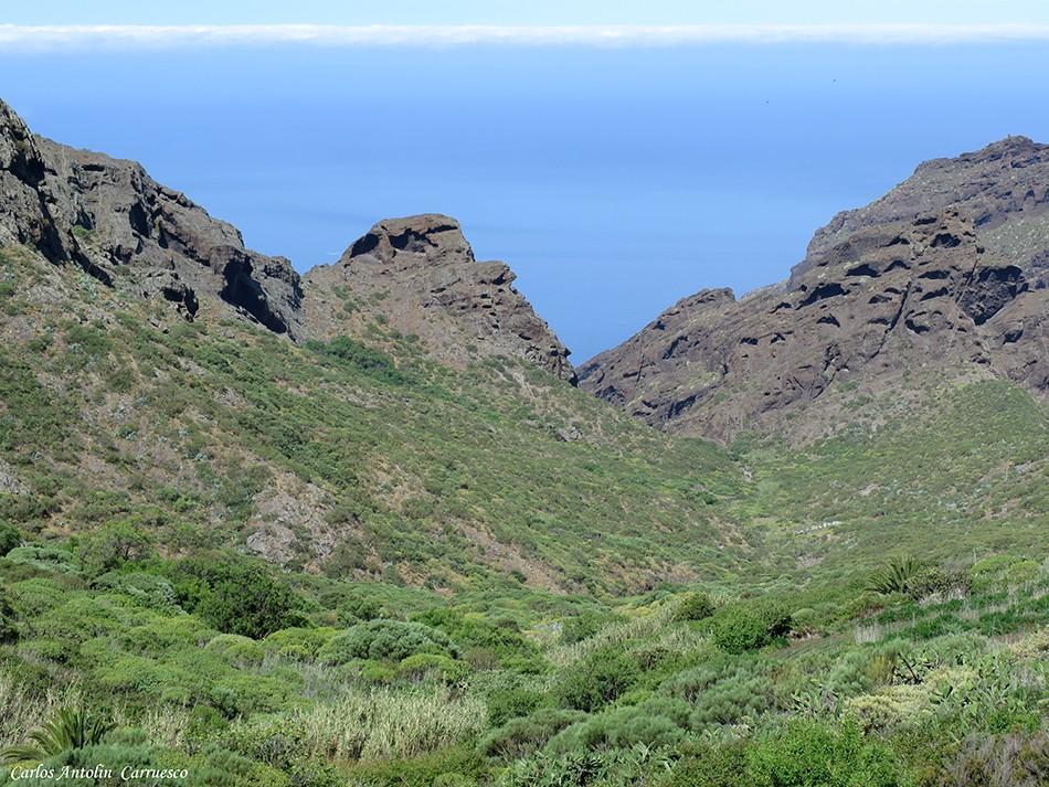 Abache - Teno - Tenerife - los carrizales
