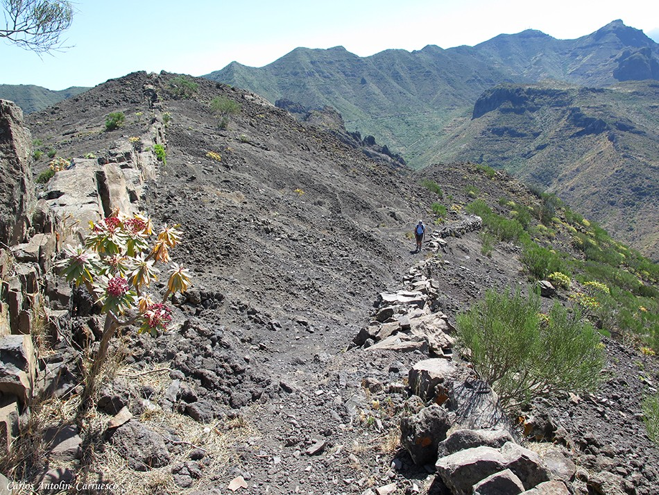 Abache - Parque Rural de Teno - Tenerife