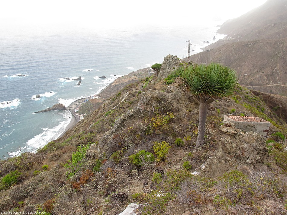 Reserva Mundial de La Biosfera - Anaga - Tenerife
