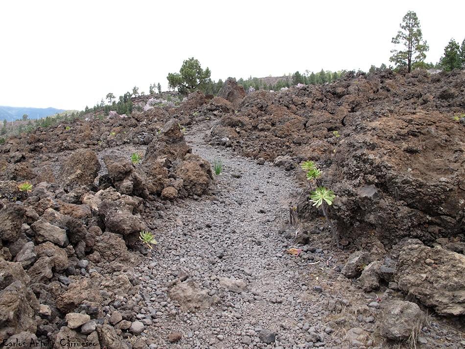 Arguayo - Ruta de los Almendros - Tenerife
