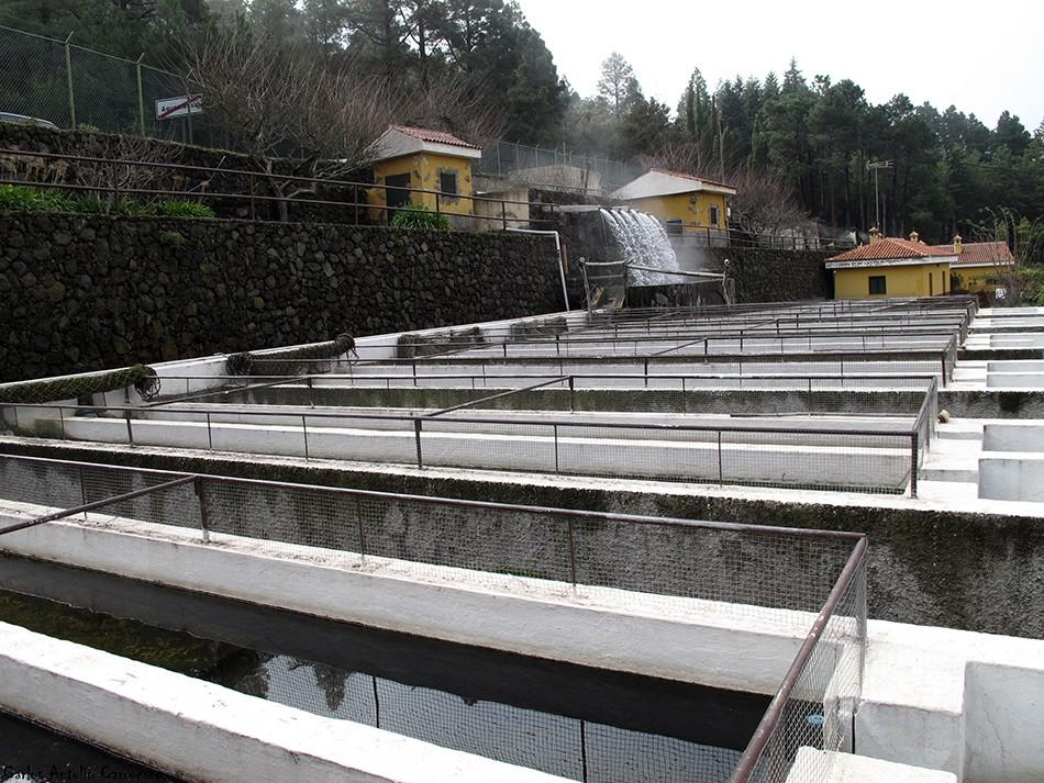 Piscifactoría - Aguamansa - TF21 - Tenerife