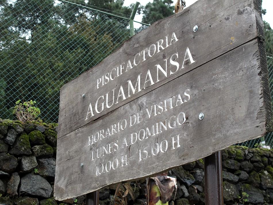 Piscifactoría - Aguamansa - carretera TF21 - La Orotava - TENERIFE