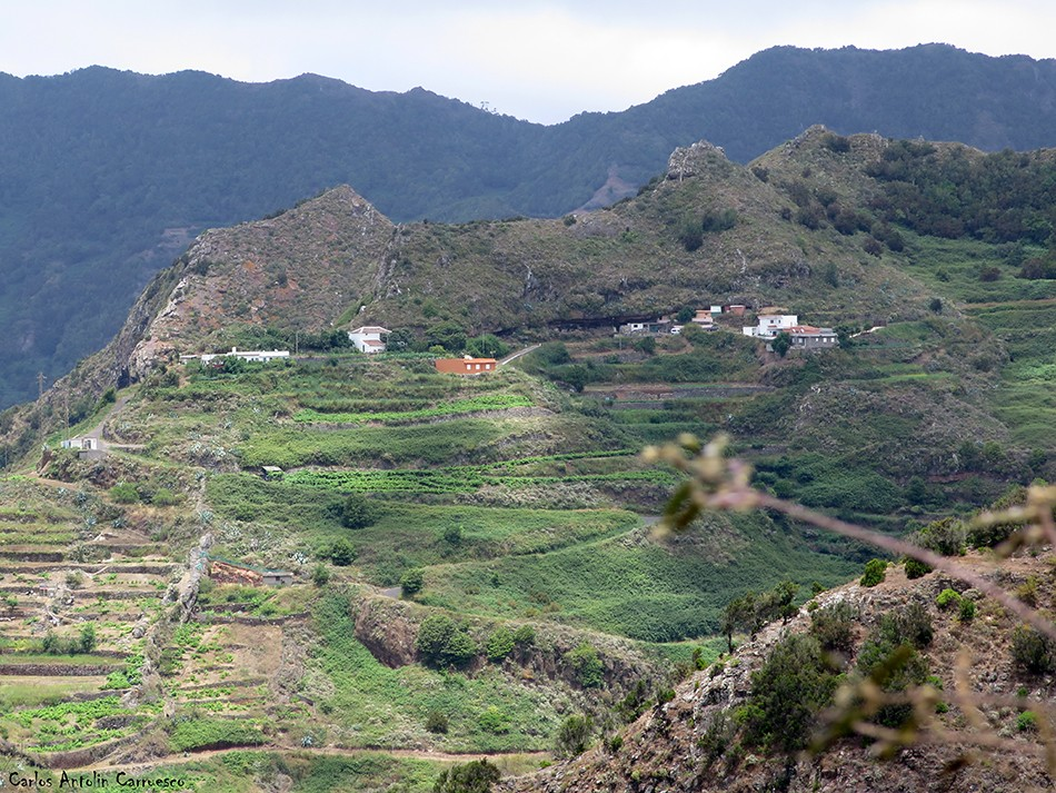 Bejía - Anaga - Tenerife
