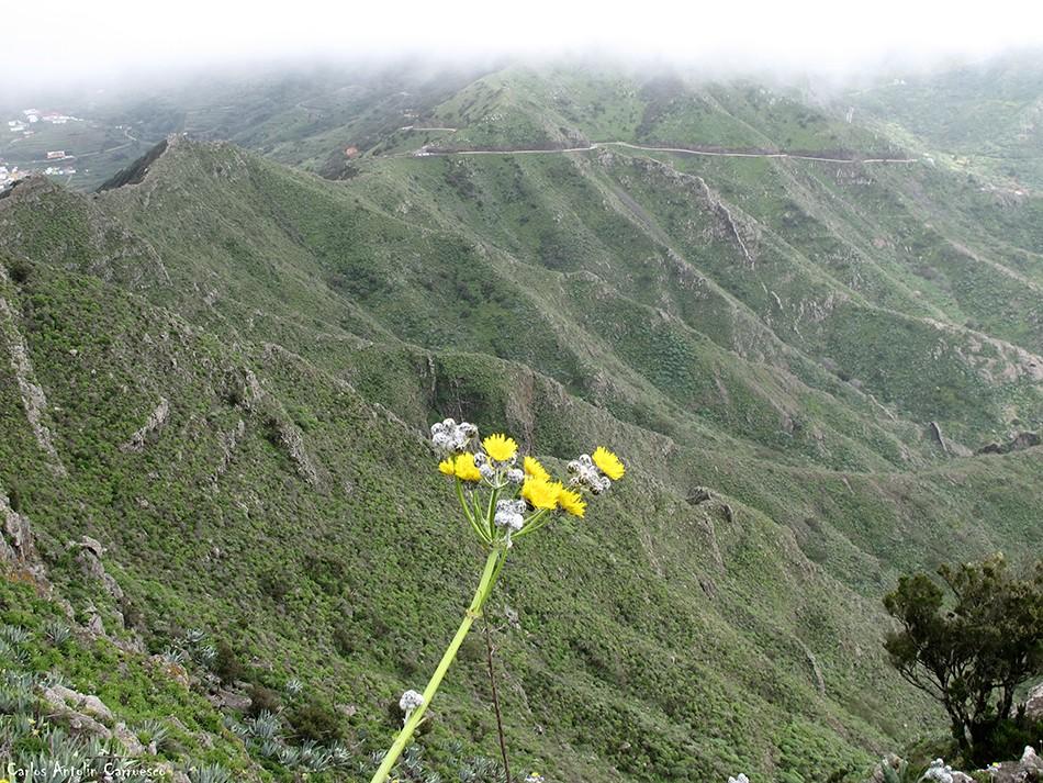 Cumbres de Baracán - Teno - Tenerife - masca - mirador de tabaiba