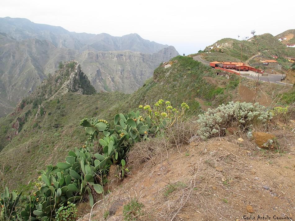 Chinamada - Anaga - Roque de Los Pinos