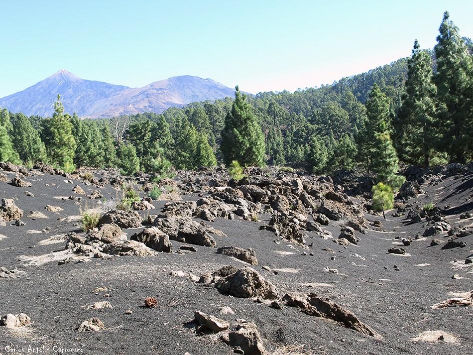Chinyero - Corona Forestal - Tenerife - Teide - Pico Viejo