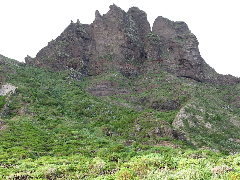 Sendero a Taganana - Anaga - Tenerife - marrubial