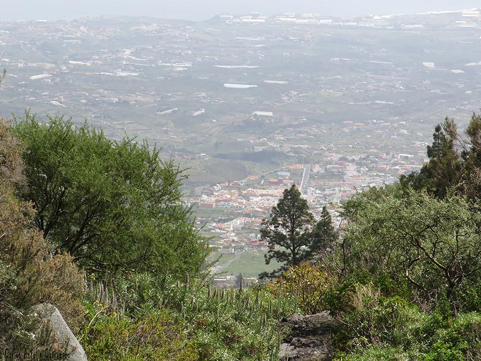 Las Gambuesas - Arafo - Tenerife