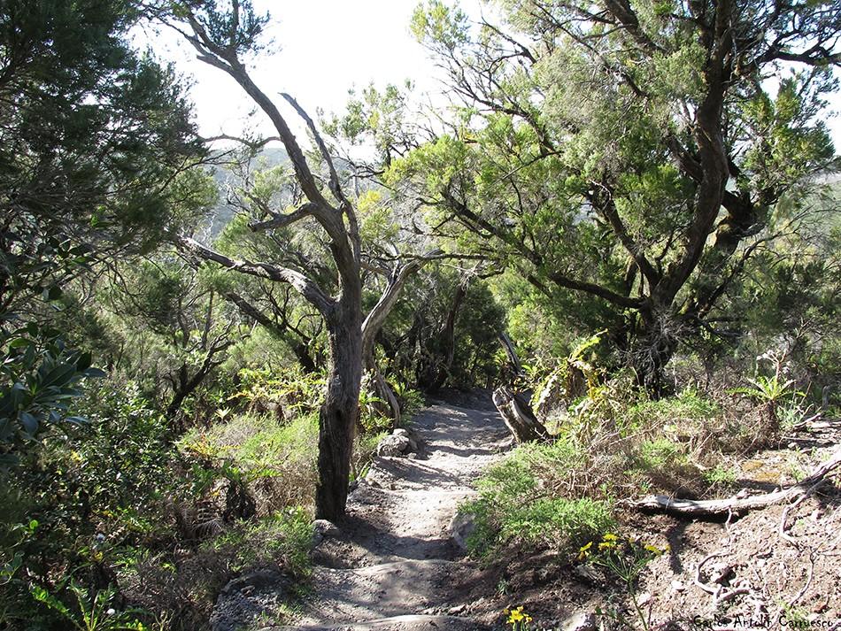 GR131 - Parque Nacional de Garajonay - La Gomera