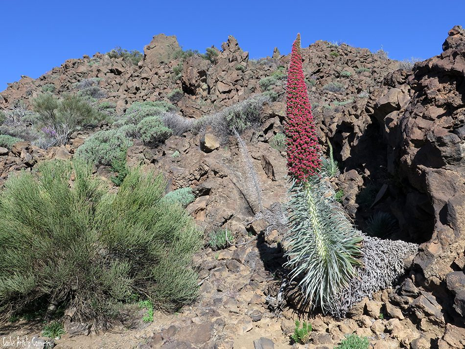 Centro de Visitantes de El Portillo - Teide - Tenerife