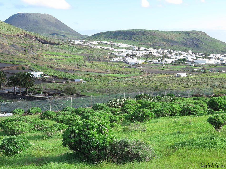 Haría - Máguez - Lanzarote