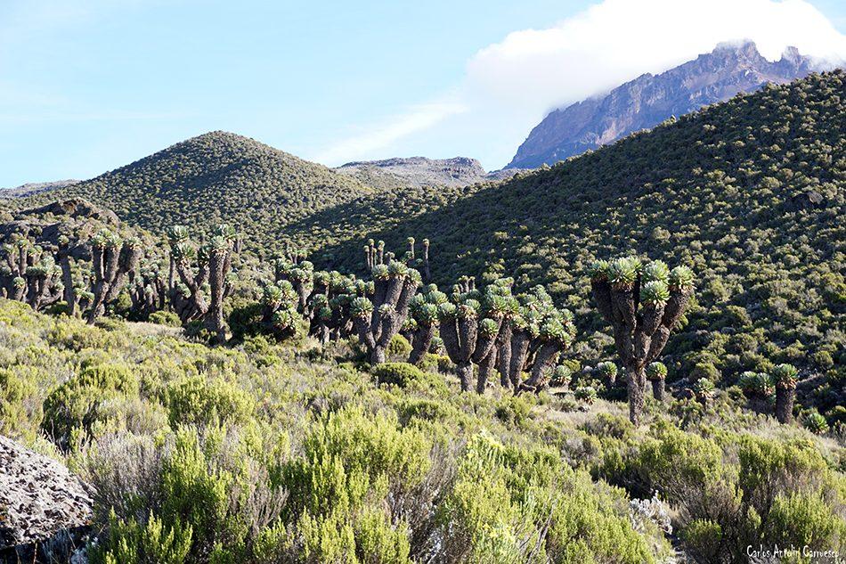 Marangu - Horombo - Kilimanjaro