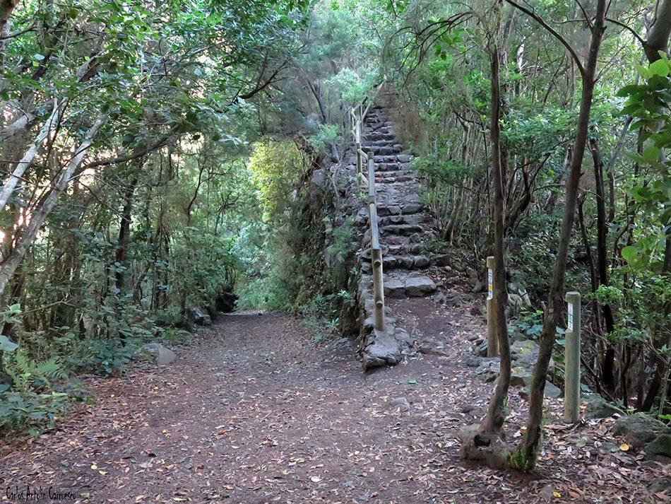 Los Tilos - Marcos y Cordero - La Palma