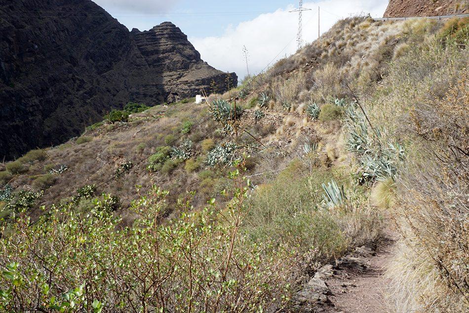 Tamadaba - Agaete - Gran Canaria - roque cumplido