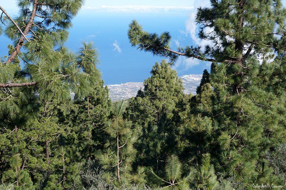 Carretera de La Esperanza - TF24 - Tenerife