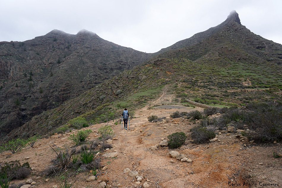 Camino de Suarez - GR131 - Tenerife - imoque - brezos