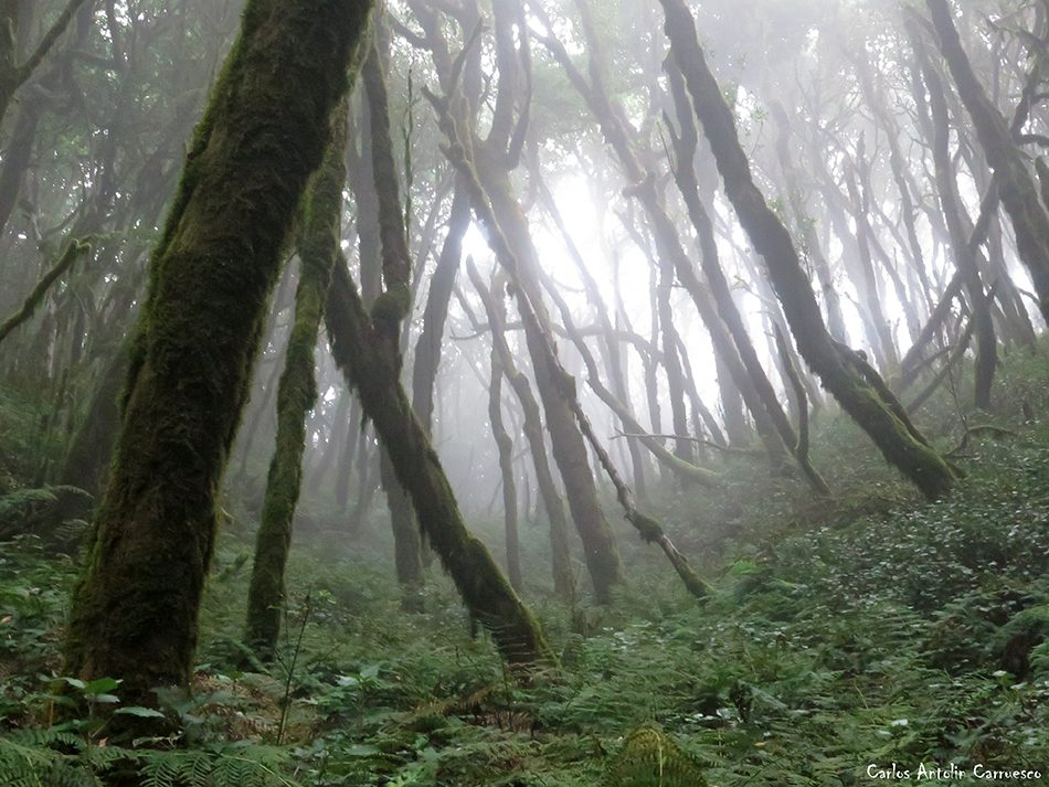 Raso de La Bruma - La Gomera